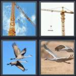 4 pics 1 word 5 letter answers crane expocarfo Images