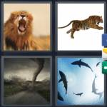 4 pics 1 word 9 letter answers ferocious expocarfo