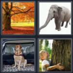 4 pics 1 word 5 letter answers trunk expocarfo Images